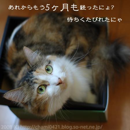 20080829_005_sonet.jpg